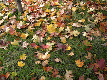 Fall Clean-Up to get your yard ready for a Winter without leaves